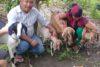 Bhakta und seine Ehefrau sind unendlich dankbar für die Ziegen. Sie hoffen, eines Tages eine grosse Zucht betreiben zu können. (csi)