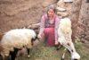 Ihr Mann verdient als Tagelöhner zu wenig für die fünfköpfige Familie. Deshalb ist Samira besonders dankbar für die Schafzucht, die ihr ermöglicht wurde. (csi)